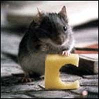 серая мышка с кусочком сыра